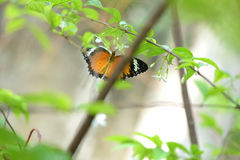 Бабочка летая для того чтобы зацвести Стоковые Изображения