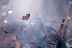 Бабочка, животные, макрос, bokeh, насекомое, природа, стоковые изображения