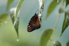 Бабочка ждать вне дождь Стоковое фото RF
