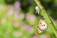бабочка заново преобразовала стоковые фото