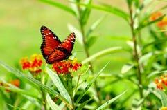 бабочка запачканная предпосылкой Стоковое фото RF