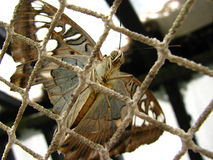 Бабочка за решеткой Стоковая Фотография
