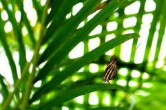 Бабочка зебры на длинных лист в aviary Стоковое Фото