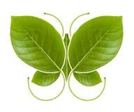 Бабочка зеленого цвета символа Eco Стоковое Фото