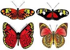 бабочка изолировала набор Стоковые Фото