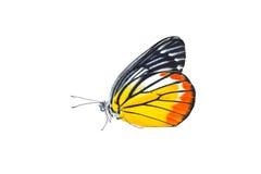 Бабочка изолированная на белой предпосылке Стоковые Фото