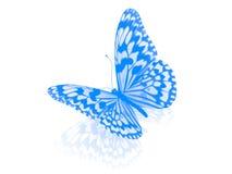 Бабочка. Изолировано. Стоковое фото RF