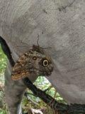 Бабочка используя камуфлирование стоковые фотографии rf