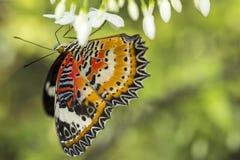 Бабочка и белый цветок Стоковое Изображение