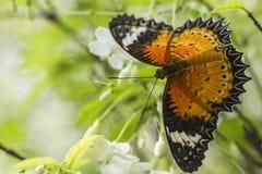 Бабочка и белый цветок Стоковые Изображения