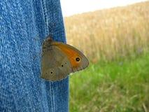 Бабочка и джинсы Стоковая Фотография