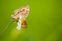 Бабочка и зеленая предпосылка Стоковые Фото