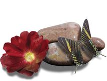 Бабочка и красный цветок Стоковое Изображение RF