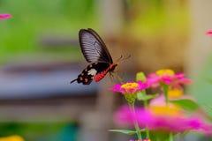 Бабочка и мягкая солнечность стоковые фотографии rf