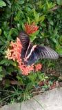 Бабочка и природа Стоковое Изображение
