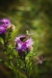 Бабочка и пчела на цветке Стоковая Фотография RF