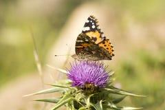 Бабочка и пчела Стоковое Изображение RF