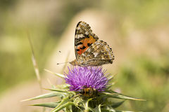 Бабочка и пчела Стоковые Изображения RF