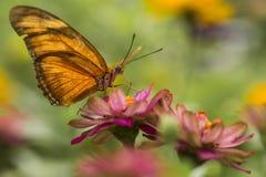 Бабочка и розовый цветок Стоковые Фото