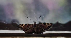 Бабочка и северное сияние Стоковое Изображение