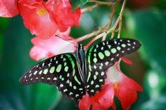 Бабочка и цветеня Стоковые Изображения