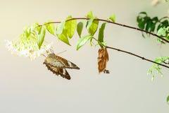 Бабочка и цветки Стоковая Фотография