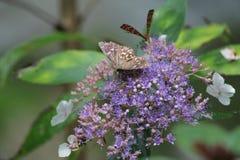 Бабочка и цветок в Чунцине стоковые фото
