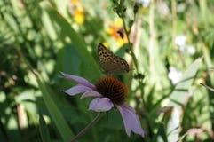 Бабочка и цветок Стоковое Изображение RF
