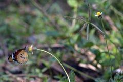 Бабочка и цветок Стоковое Изображение