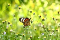 Бабочка и цветок Стоковые Фото
