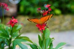 Бабочка и цветок Стоковые Изображения