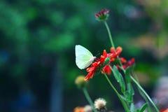 Бабочка и цветок Стоковая Фотография