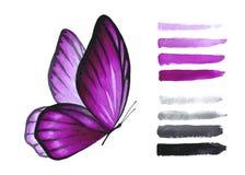 Бабочка и щетка пинка акварели стоковые изображения