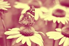 Бабочка и coneflowers, художнические стоковое фото rf