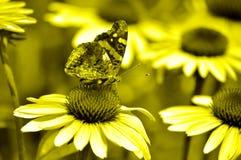 Бабочка и coneflowers, художнические стоковое изображение rf