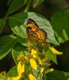 Бабочка и wildflowers Стоковая Фотография RF