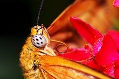 Бабочка конца-вверх стоковые изображения