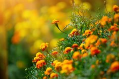 Бабочка, которая сидит на красивом цветке Стоковые Фото