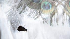 Бабочка, который летели в дом видеоматериал