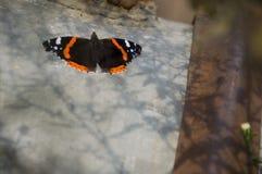 Бабочка крапивниц сидит на коробке утюга света Стоковые Изображения RF