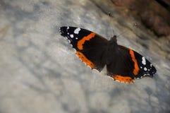 Бабочка крапивниц сидит на коробке утюга света Стоковое Фото