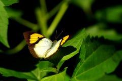 Бабочка, красивые и красочные насекомые Стоковое Фото