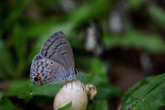 Бабочка, красивые и красочные насекомые Стоковое фото RF