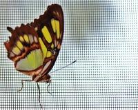 Бабочка красочная в лете в саде Стоковое Фото