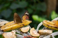 Бабочка крупного плана на предпосылке цветка расплывчатой в саде или в na Стоковая Фотография RF