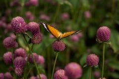 Бабочка крупного плана на предпосылке цветка расплывчатой в саде Стоковые Фото