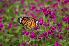 Бабочка крупного плана на предпосылке цветка расплывчатой Стоковое Фото