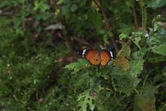 Бабочка крупного плана в природе Стоковое Изображение RF