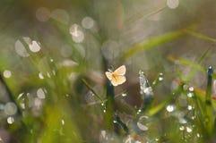 Бабочка крупного плана желтая Стоковые Фото