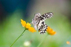 Бабочка крупного плана на цветках Стоковая Фотография RF